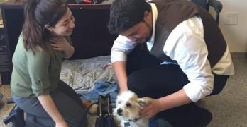 Dog Spa Fugitive Reunites with Tearful, Grateful Owner