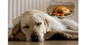 Thanksgiving Hints & Tips to Keep Your Pets Food Safe