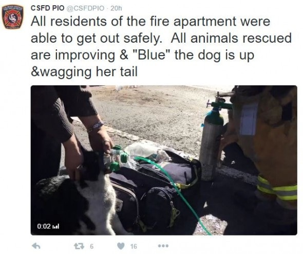 Colorado Springs FD Rescues Pets From Apartment Fire