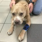 Police Officer's Dog Shot During Burglary Will Recover
