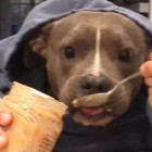 Pit Bull Meets Peanut Butter: A Love Story
