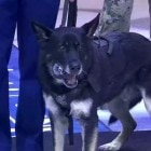 Bomb-Sniffing Dog Drops Puck at NHL Game