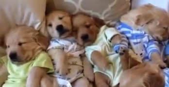 Puppy Slumber Party: Possibly the Cutest Thing You'll See Today!
