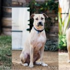 From Emaciated and Scared to Healthy and Confident, Tilly is a Survivor