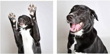 Tippy Aims to Break Internet with his Adoption Photos!