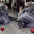 Dog & Strawberry Make for Real-life Cartoon
