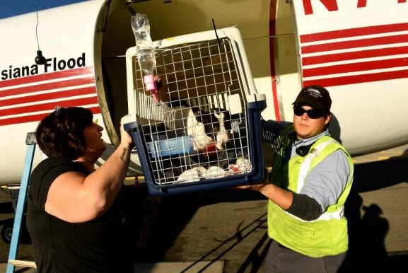 Dogs are off-loaded after their 27-hour journey toward loving forever homes. Photo: Helen H. Richardson/The Denver Post