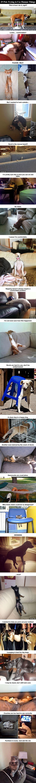 12-1-16-pets-failing-at-using-people-things1