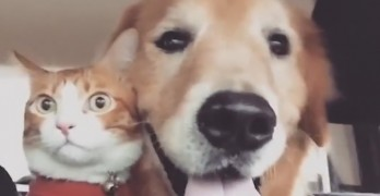 Dog Makes Road-Trip Even Worse for This Poor Cat