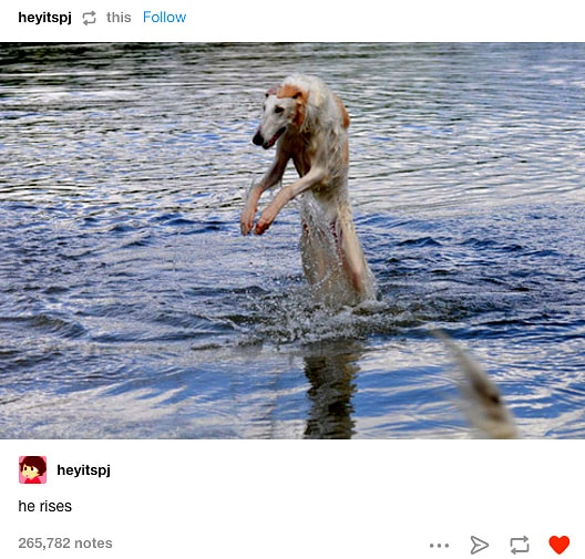 12-12-16-funny-dogs-to-get-you-through-the-week18