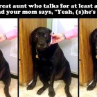 12-12-16-funny-dogs-to-get-you-through-the-week2-copy-2