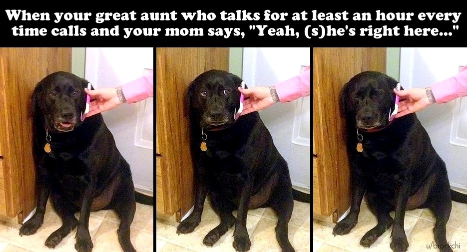 31 Seriously Funny Dog and Cat Photos to Help You Get Through the Week