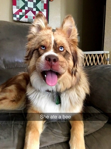12-12-16-funny-dogs-to-get-you-through-the-week22