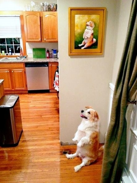 12-12-16-funny-dogs-to-get-you-through-the-week27
