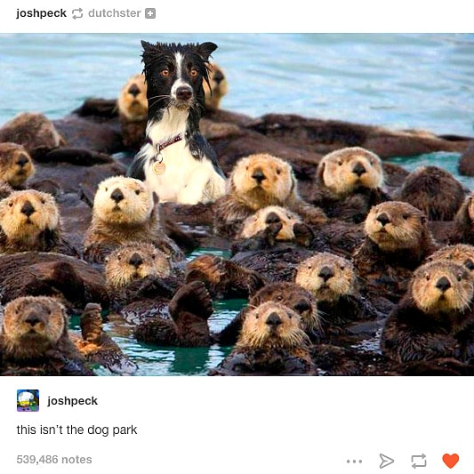12-12-16-funny-dogs-to-get-you-through-the-week31