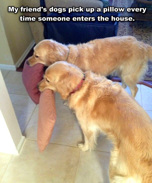 12-12-16-funny-dogs-to-get-you-through-the-week4