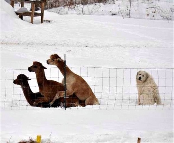 12-12-16-funny-dogs-to-get-you-through-the-week9