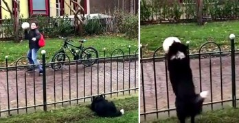 """Clever Dog Tricks Passersby into Playing With Her by Fetching Her """"Lost"""" Ball"""