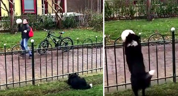 "Clever Dog Tricks Passersby into Playing With Her by Fetching Her ""Lost"" Ball"