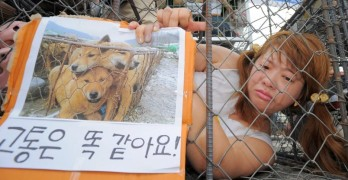 BREAKING NEWS:  Massive Dog Meat Market in South Korea Has Been Shut Down