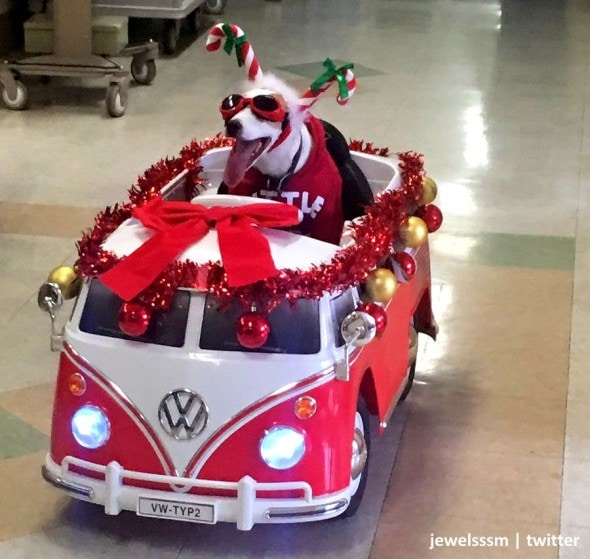 12-14-16-charming-christmas-canine-is-bringing-holiday-cheer-to-hospital-patients1