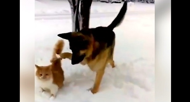 Devilish Dog Completely Ruins Cat's First Experience in the Snow