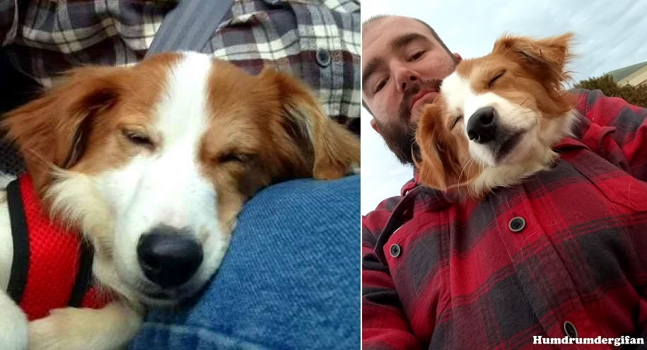 Dog Living in an Abandoned Apartment by Herself for a Week Could Not Be Happier to Be Adopted