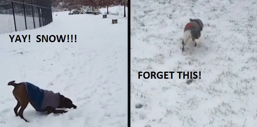 Some Dogs Love It, Some Dogs Hate It! Either Way, Winter Is Here
