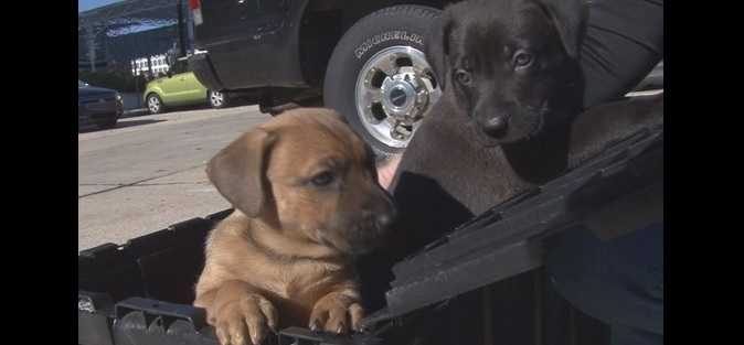 A Very Happy Ending for a Mother Dog and Her Two Pups Found Left Out in the Cold