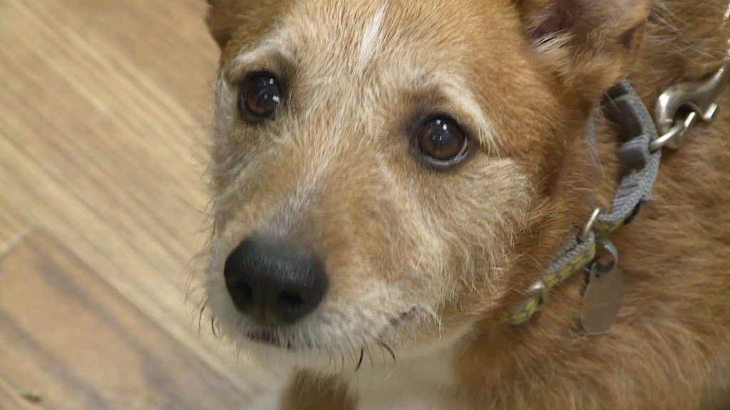 Family to Adopt Dog With Cancer to Give Him Best Christmas Ever
