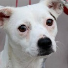Janet Was Left Hungry in the Cold With 5 Pups to Feed and Needs a Second Chance