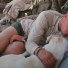 Soldier Deployed in Afghanistan Meets Stray, Falls in Love and Smuggles the Dog Out of a War Zone to the US