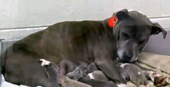 Pregnant Pit Bull Locked in a Dumpster Is Rescued Just Hours Before Giving Birth