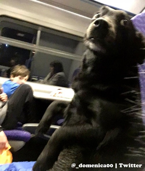 12-22-16-train-riding-dog-is-a-person-just-like-anyone-else1
