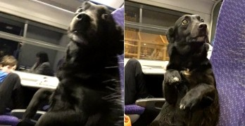 12-22-16-train-riding-dog-is-a-person-just-like-anyone-else3