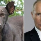Is That Who I Think it Is, or Just a Dog That Looks A LOT Like Them…?