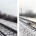 Fearless Dog Protects His Injured Girlfriend from an Oncoming Train