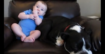 Baby's Fart Scares Dog Right Off of the Chair They're Sharing