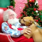 Rescue Pit Bull Loses His Mind When He Is Taken to See Santa at His Workshop