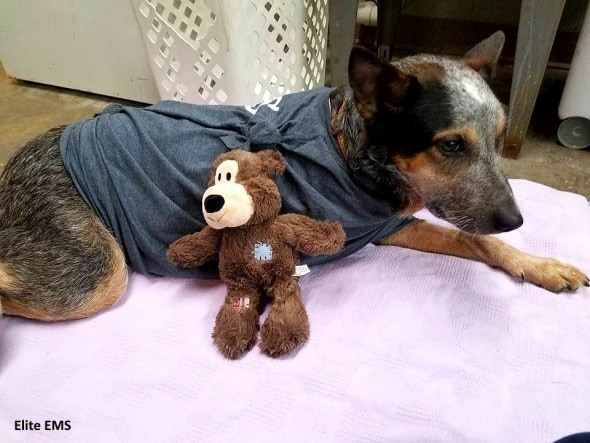 12-28-16-mean-dog-rescued-by-paramedics-is-one-of-the-crew11