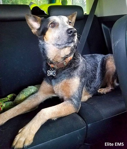 12-28-16-mean-dog-rescued-by-paramedics-is-one-of-the-crew3