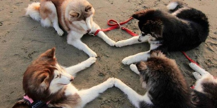 Ten of THE BEST Posts About Huskies We've Ever Seen!