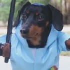 Crusoe LOVES to Wear His Favorite Costume Whenever it Gets Rainy Out