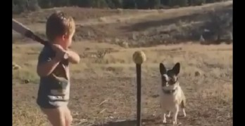 This Boy and His Dog Have a Really Good Game Worked Out Here!