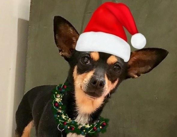 12-8-16-trio-animal-foundation-christmas-carol0