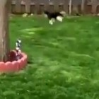 See What Happens When a Dog Is Raised With Rabbits…