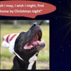 Tallulah's Holiday Wish Is to End Her Five-Year Stay at a Texas Shelter
