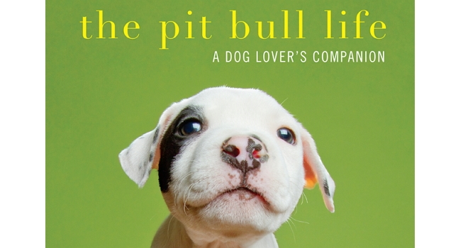 The Pit Bull Life is Not for Thugs