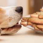 Healthful Holiday Treats a Specialty at Prague Dog Salon
