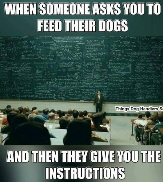 feed-the-dogs